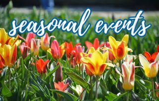 """Photo of red and yellow tulips with text overlay reading """"Seasonal events"""""""