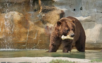 Visit the Detroit Zoo for Animals, Events, and Family Fun
