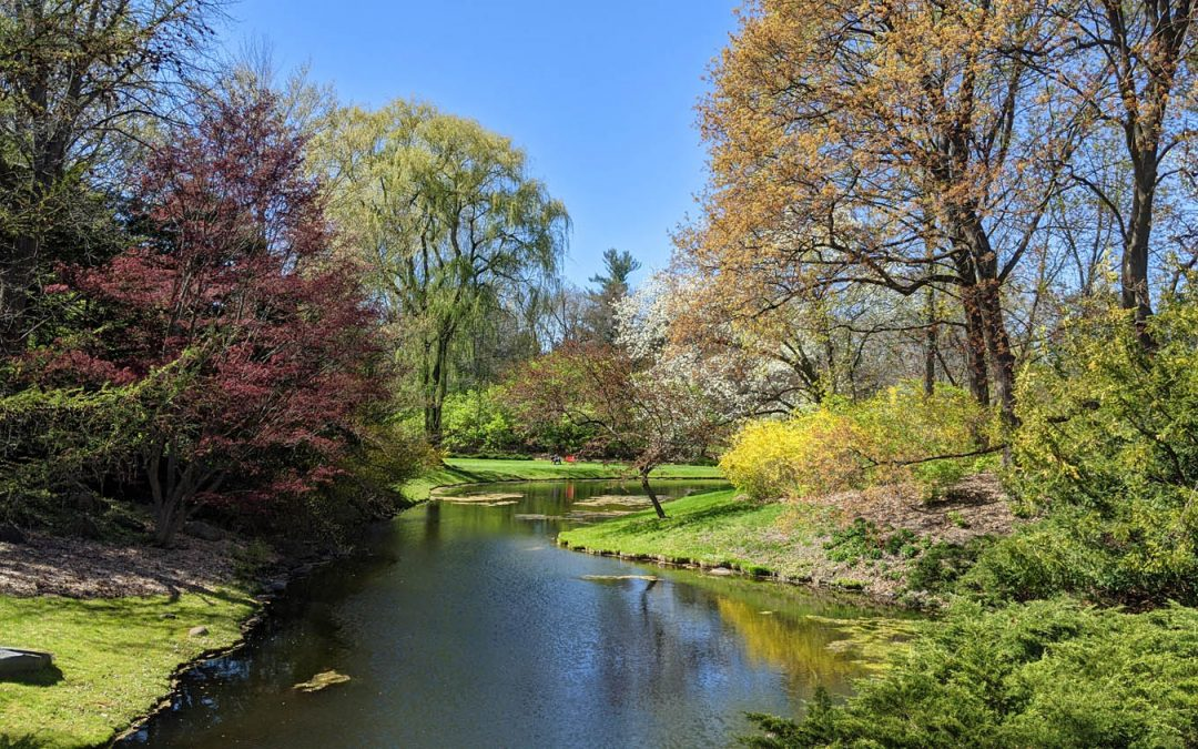 Walk Through the Trees at Dow Gardens in Midland
