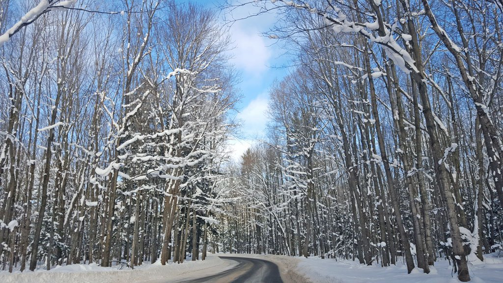 Road winding amid leafless, snow-covered trees during winter in Michigan