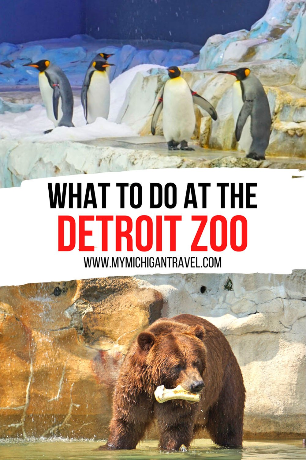 """Photo collage of king penguins in an indoor exhibit and a large grizzly bear holding a bone with text overlay reading """"what to do at the Detroit Zoo"""""""
