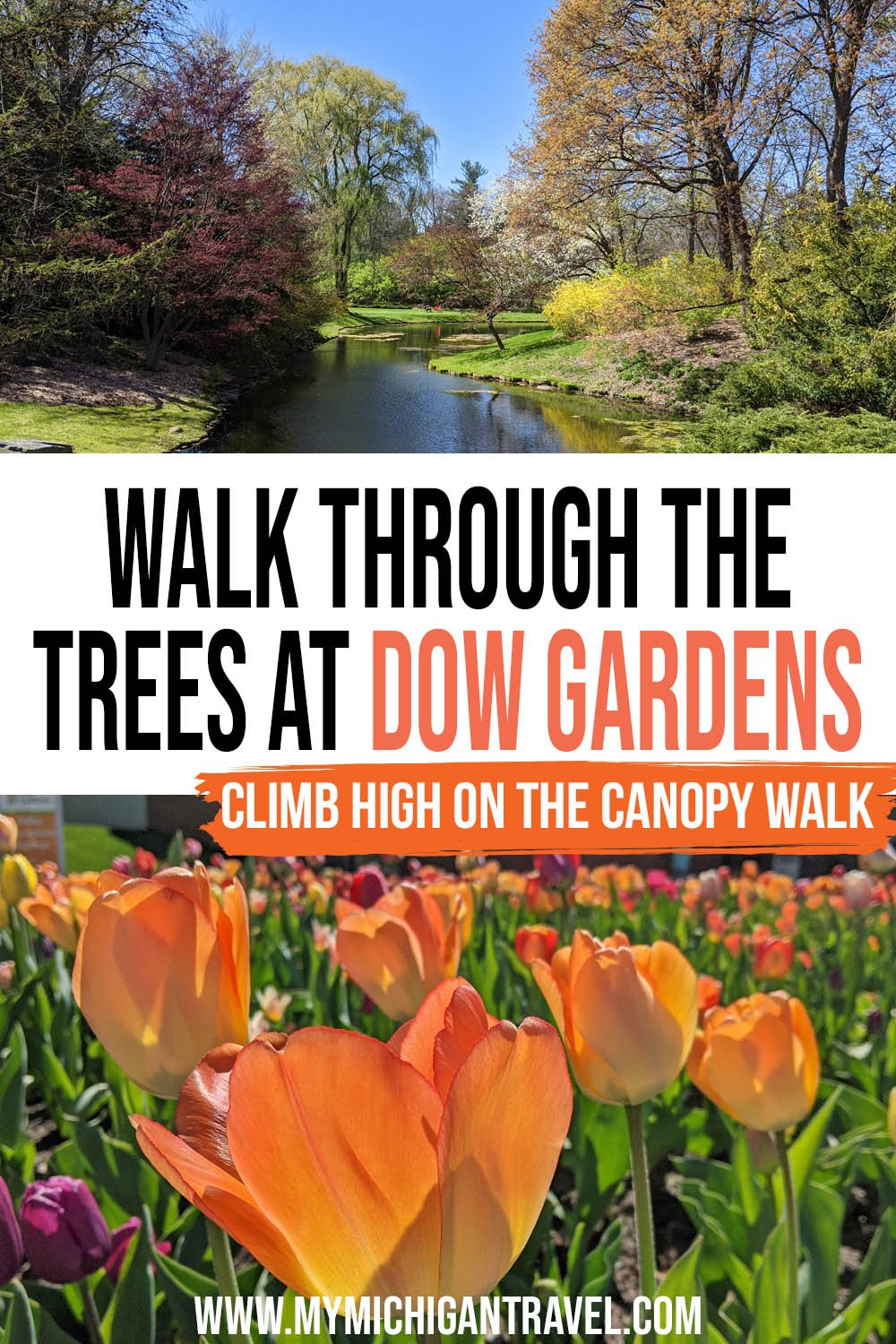 """Photo collage of a peaceful river surrounded by budding trees and a closeup of yellow-orange tulips in bloom with text overlay reading, """"walk through the trees at Dow Gardens - climb high on the canopy walk"""""""