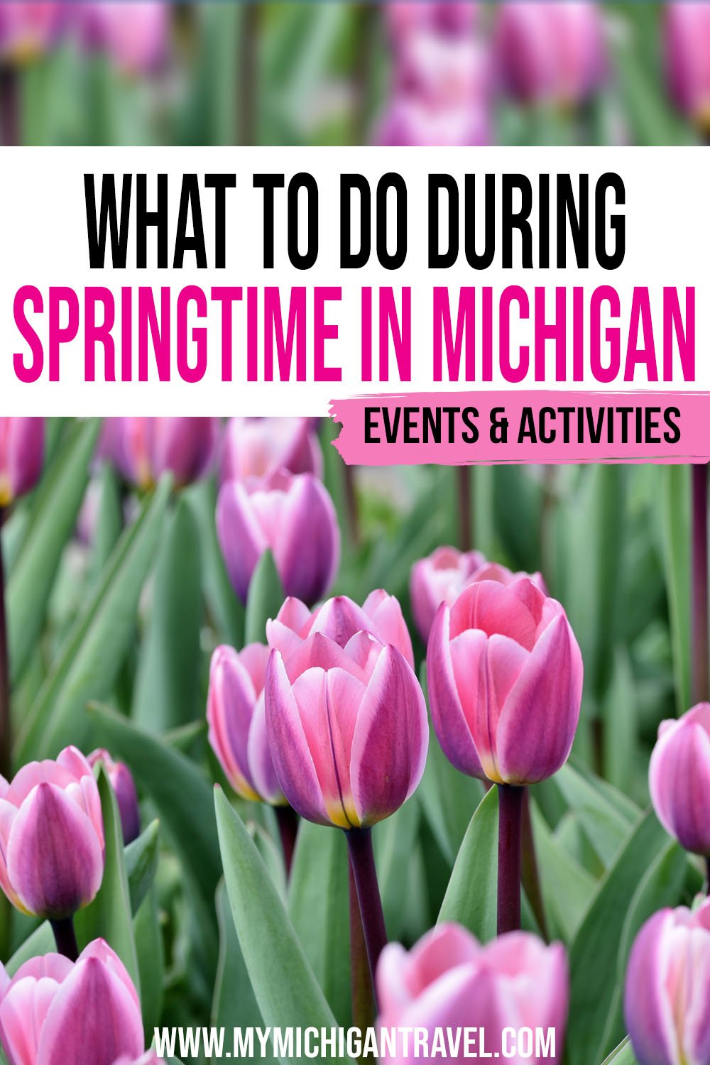 """Pink and purple tulips with text overlay reading """"What to do during springtime in Michigan - events & activities"""""""