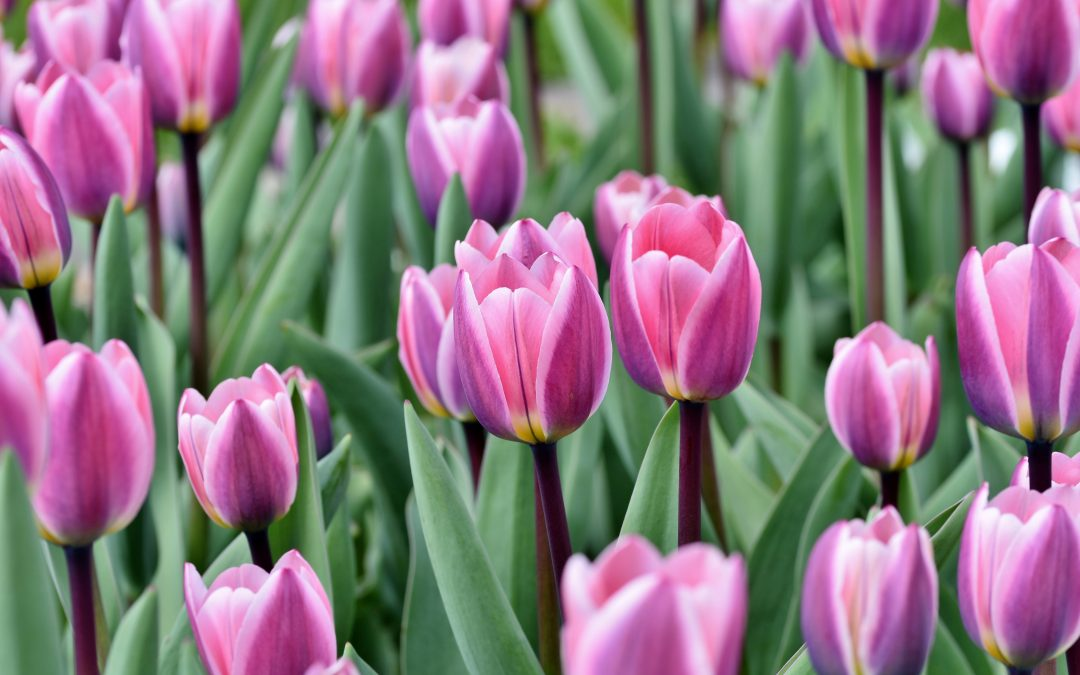 Springtime Things to Do in Michigan