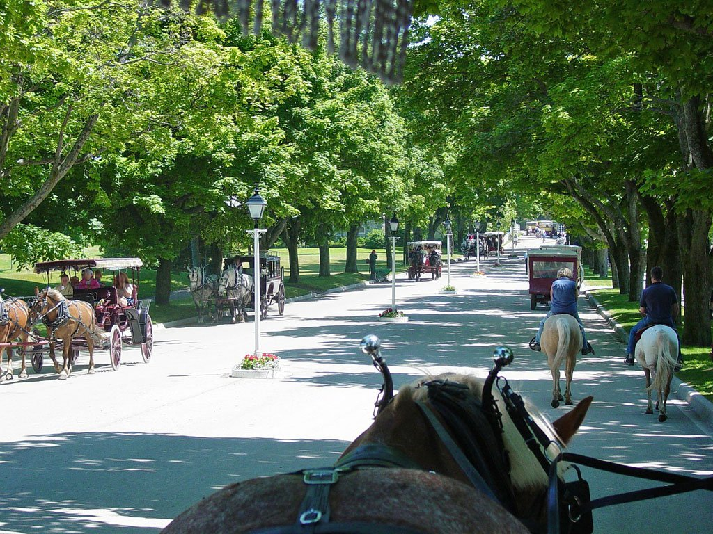 View of a tree-lined street with many horse-draw carriages as seen from the driver's seat of another carriage
