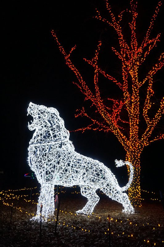 Roaring lion sculpture made of white Christmas lights with a tree lit with red lights in the background